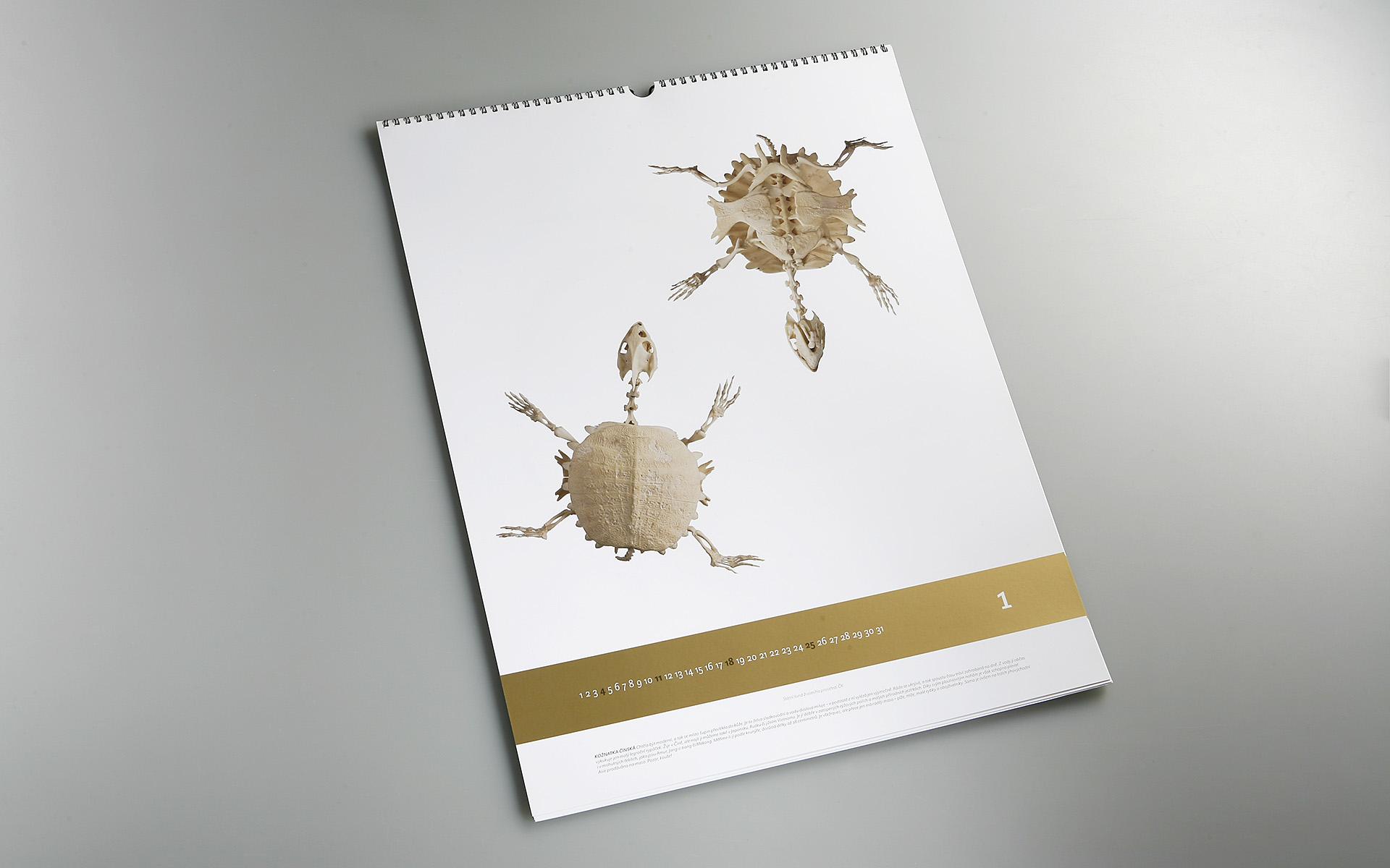 2009-SFZP-kalendar-MG_0513