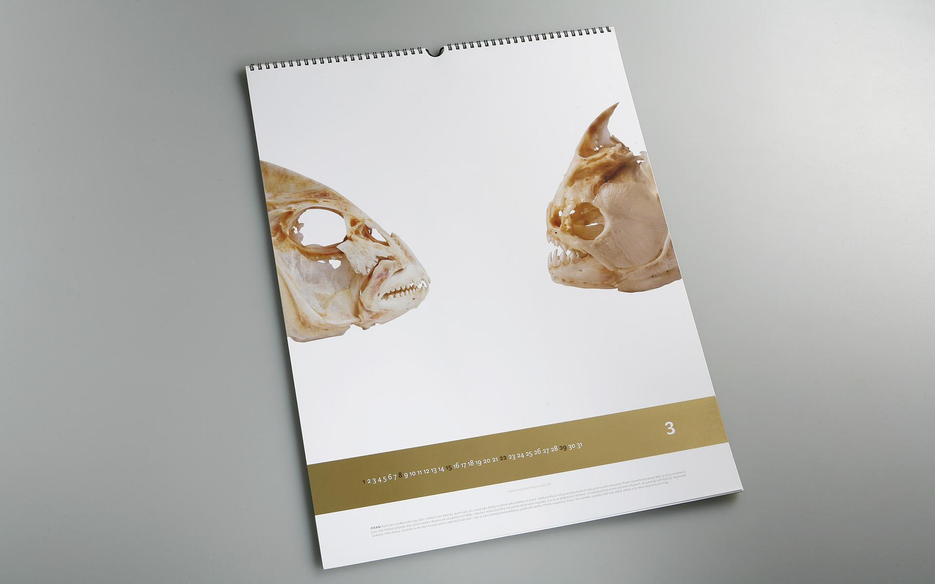 2009-SFZP-kalendar-MG_0516
